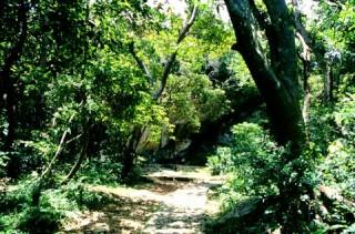 斎場御嶽の写真