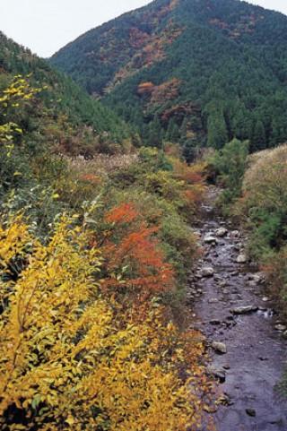 島の川渓谷の写真
