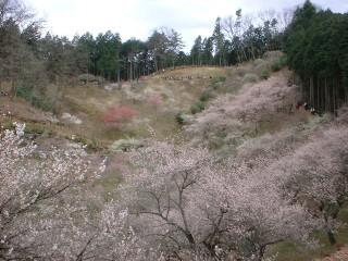 吉野梅郷の写真
