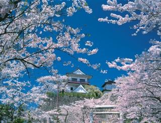 涌谷城の写真