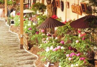 日光街道今市宿 牡丹室内庭園の写真