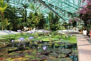 草津市立水生植物公園みずの森の写真