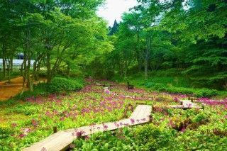 六甲高山植物園の写真