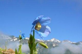 白馬五竜高山植物園の写真