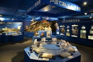 駿河湾深海生物館(ミュゼ ヘダビス)の写真