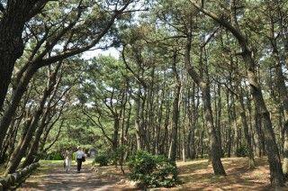 千本松原(千本浜公園)の写真