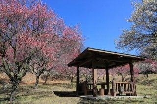 敷島総合公園の写真