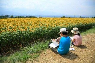 明野村ひまわり畑(北杜市明野サンフラワーフェス)の写真