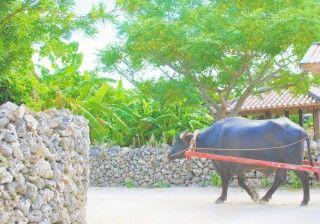 竹富島の写真