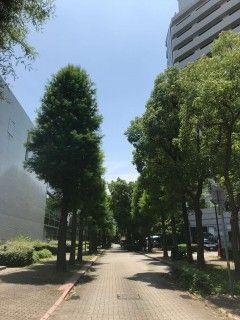 「P.N.リンリン」さんからの投稿写真@日本芸術会館
