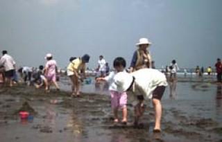 大竹海岸の写真