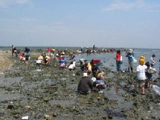 乙方海岸潮干狩り場の写真