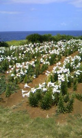 伊江島の写真
