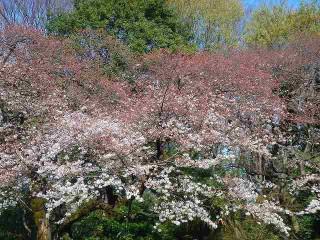 東京都庭園美術館の写真