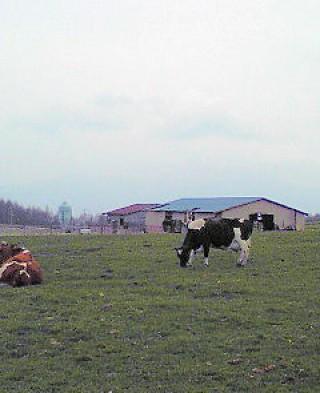 長門牧場の写真