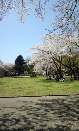 里見公園の写真