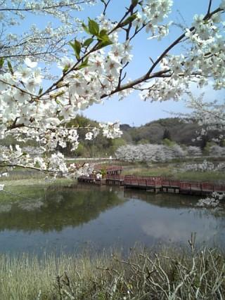 桜台中央公園・桜台調整池(深城池)の写真