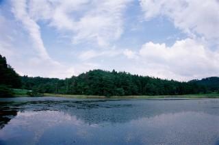 樫原湿原の写真