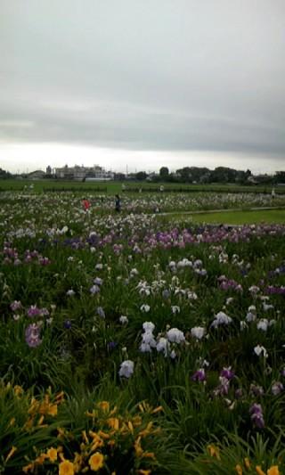 菖蒲城趾あやめ園の写真