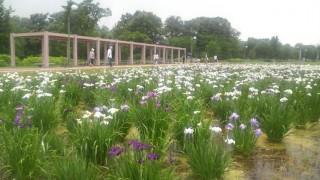 別府沼公園の写真