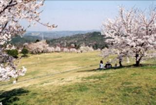 たけべの森公園の写真