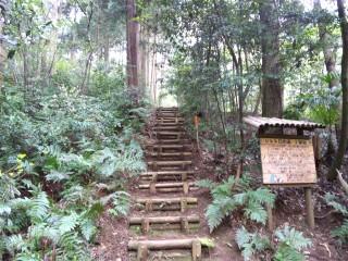 狭山丘陵(トトロの森)の写真