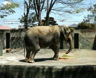 井の頭自然文化園動物園の写真