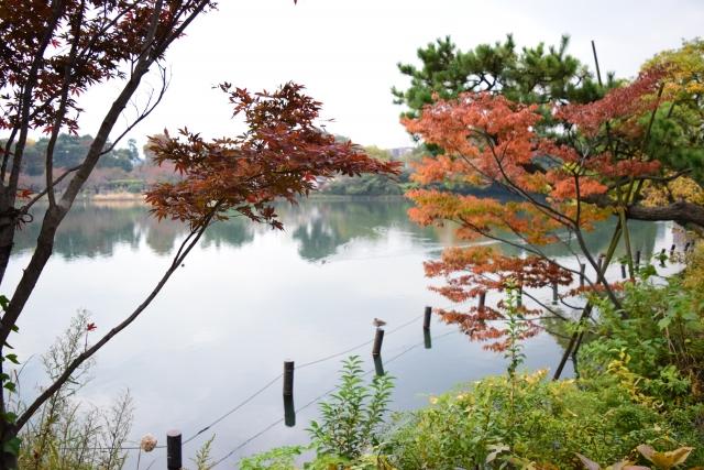 洗足池公園の地図アクセス・クチ...
